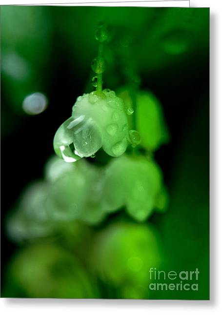 Sweating Greeting Cards - Lily of the valley Greeting Card by Odon Czintos
