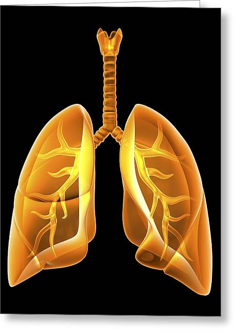 Airway Photographs Greeting Cards - Lungs, Artwork Greeting Card by Pasieka