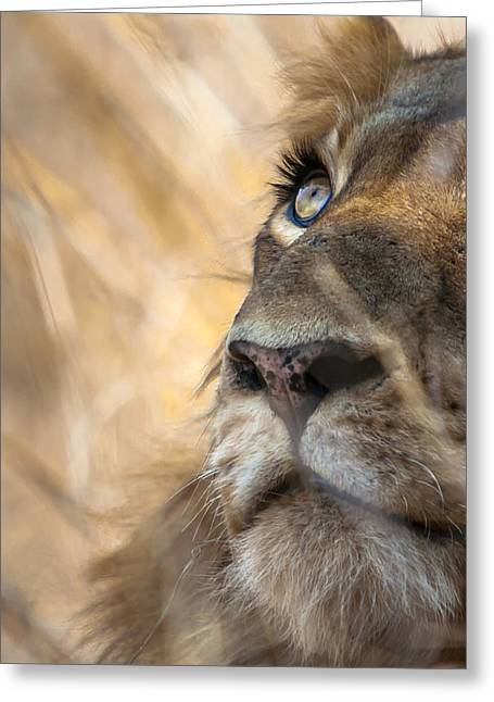Big Five Greeting Cards - Male Lion Greeting Card by Hein Welman