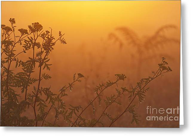 Styria Greeting Cards - Meadow flowers Greeting Card by Odon Czintos