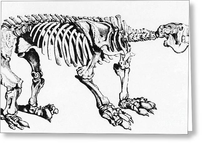 Megatherium, Extinct Ground Sloth Greeting Card by Science Source