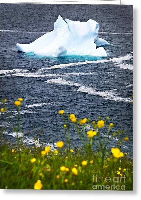 Meltdown Greeting Cards - Melting iceberg Greeting Card by Elena Elisseeva