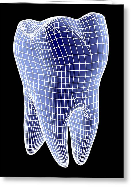 Part Of The Body Greeting Cards - Molar Tooth Greeting Card by Pasieka