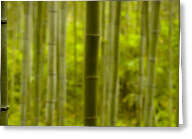 Renewable Greeting Cards - Mystical Bamboo Greeting Card by Sebastian Musial