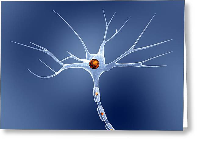 Single-celled Greeting Cards - Nerve Cell Greeting Card by Pasieka