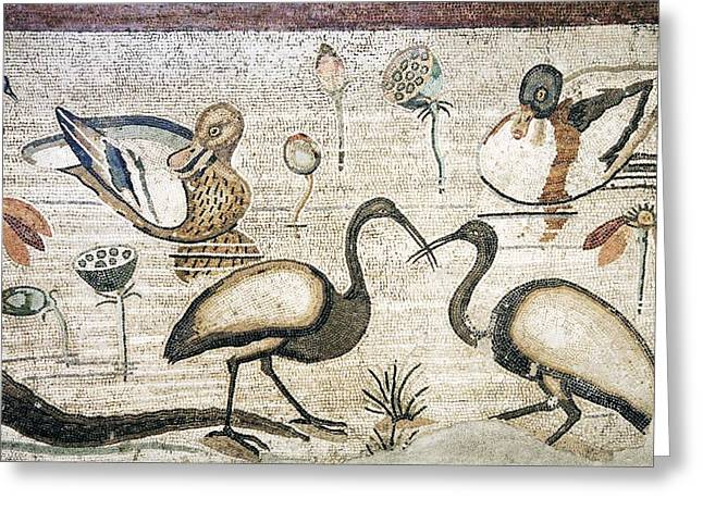 Ibis Greeting Cards - Nile Flora And Fauna, Roman Mosaic Greeting Card by Sheila Terry