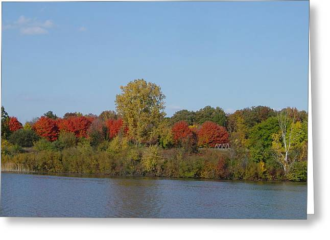 Trees Reflecting In Water Greeting Cards - October in Michigan Greeting Card by Margrit Schlatter