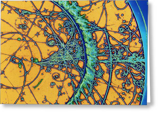 Particle Tracks Greeting Card by Patrice Loiez, Cern
