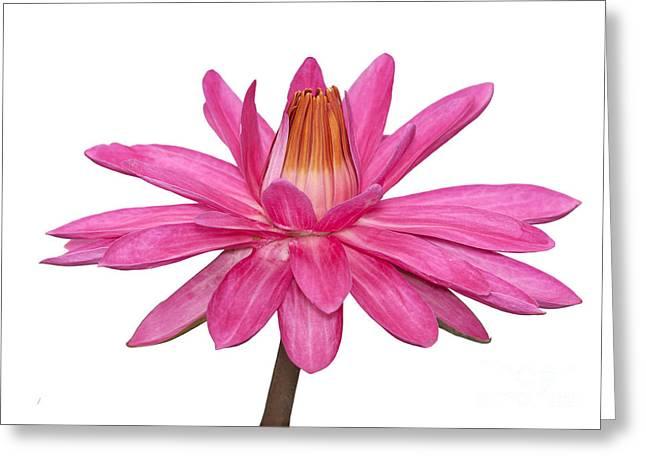 Reflex Greeting Cards - Pink lotus Greeting Card by Anek Suwannaphoom