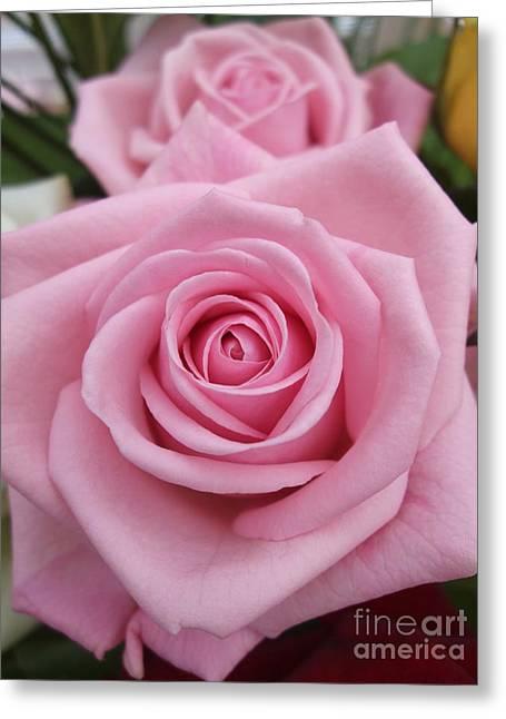 Valentine Greeting Cards - Pink Rose Greeting Card by Deborah Brewer