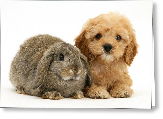 Puppies. Puppy Greeting Cards - Puppy And Rabbit Greeting Card by Mark Taylor