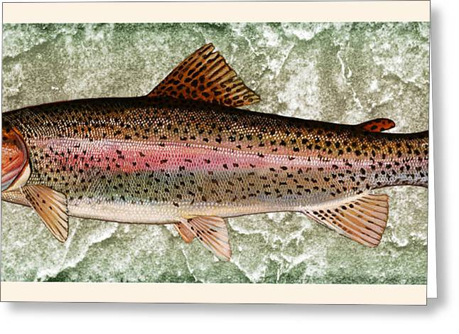Brown Trout Photographs Greeting Cards - Rainbow Trout Greeting Card by John Stephens