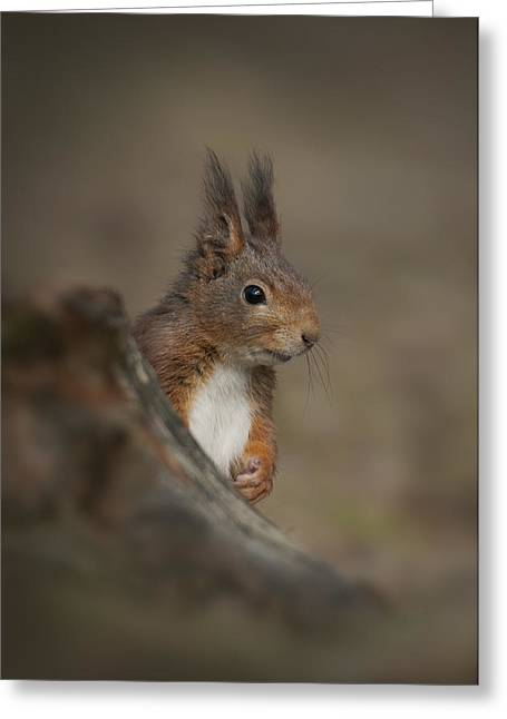 Merseyside Greeting Cards - Red Squirrel Greeting Card by Andy Astbury