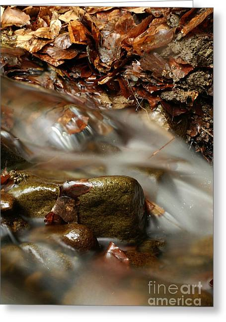 Sweating Greeting Cards - River Greeting Card by Odon Czintos