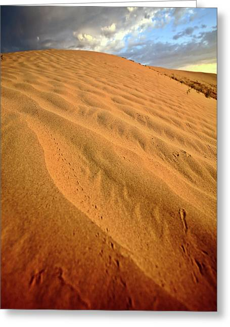 Sand Patterns Greeting Cards - Sand dune at Great Sand Hills in scenic Saskatchewan Greeting Card by Mark Duffy