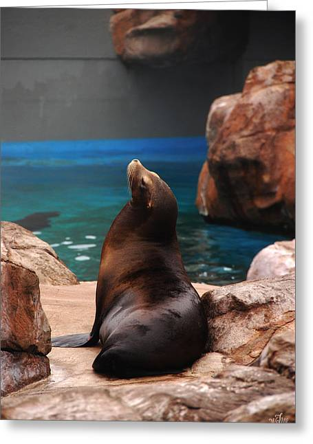 California Sea Lions Greeting Cards - Sea Lion Greeting Card by Thea Wolff
