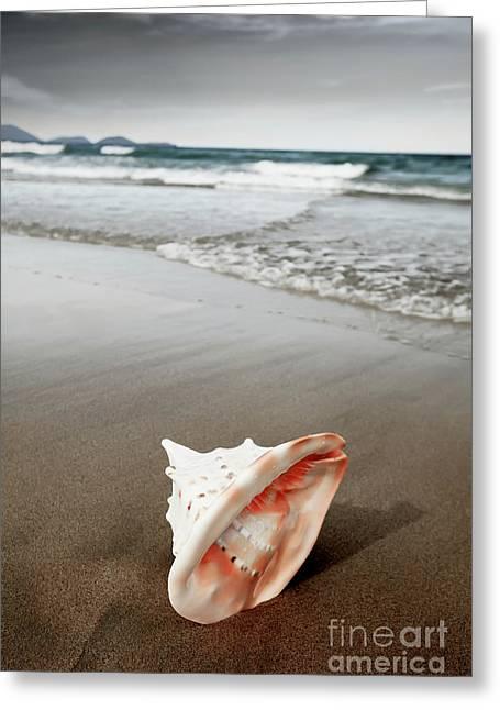 Miami Heat Greeting Cards - Seashell Greeting Card by MotHaiBaPhoto Prints