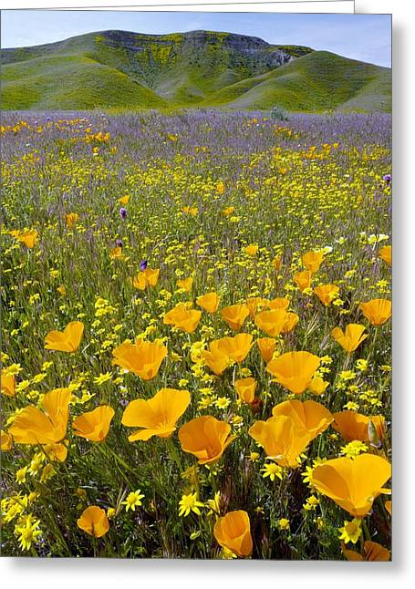San Luis Obispo Greeting Cards - Shell Creek, California Greeting Card by Bob Gibbons