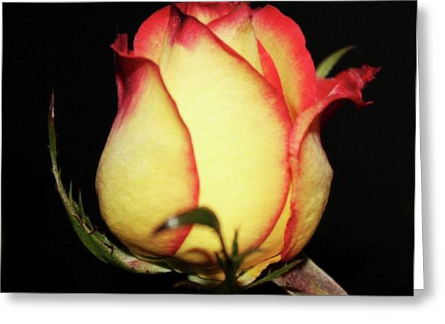 Pictures Of Oregon Greeting Cards - Single Rose Greeting Card by Cathie Tyler