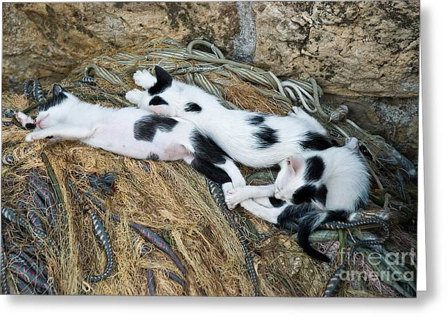 Playful Greeting Cards - 3 Sleepy Kittens Greeting Card by Jim Chamberlain