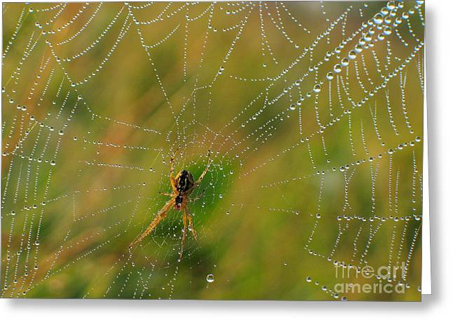 Sweating Greeting Cards - Spiderweb Greeting Card by Odon Czintos