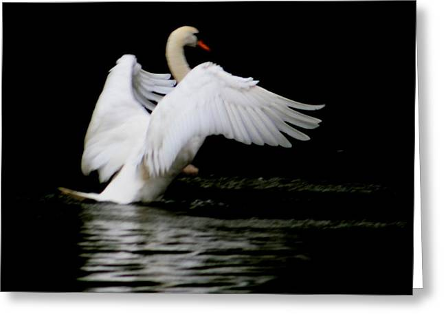 Reflection In Water Pyrography Greeting Cards - Swan Beauty Greeting Card by Valia Bradshaw