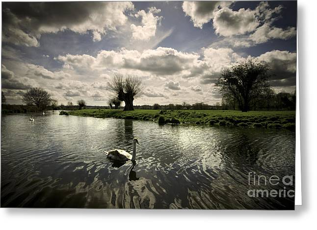Constable Greeting Cards - Swans On The Stour Greeting Card by Darren Burroughs