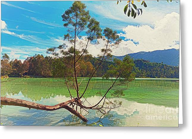 Tree Roots Photographs Greeting Cards - Telaga Warna lake Greeting Card by MotHaiBaPhoto Prints