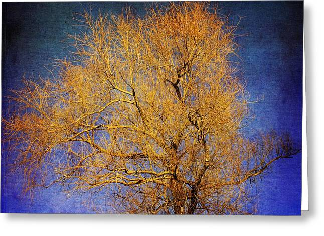 Bare Tree Photographs Greeting Cards - Textured tree Greeting Card by Bernard Jaubert