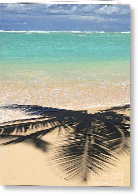 Pristine Beaches Greeting Cards - Tropical beach Greeting Card by Elena Elisseeva