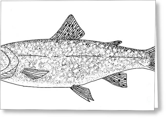 Aquatic Greeting Cards - Trout Greeting Card by Granger