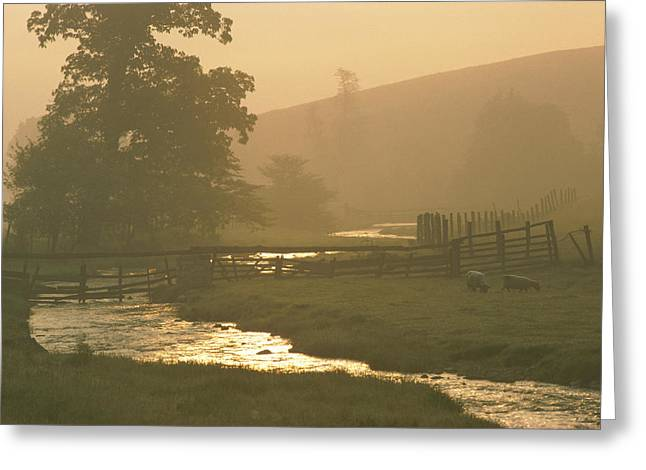 Allegheny Greeting Cards - Untitled Greeting Card by James L. Stanfield