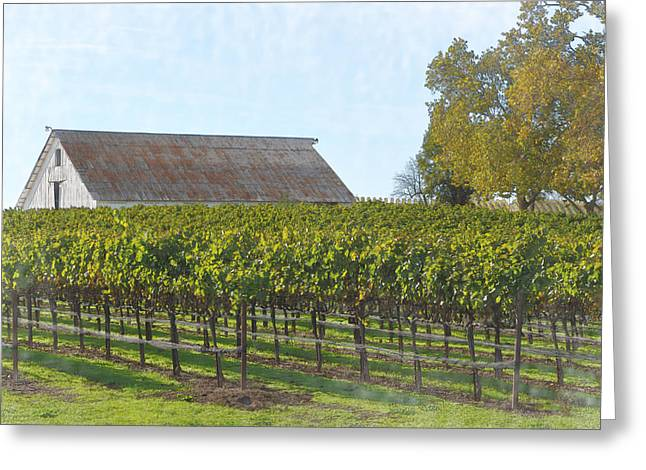Winemaking Digital Greeting Cards - Vineyard with Old Barn Greeting Card by Brandon Bourdages