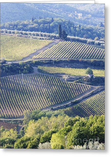 Chianti Greeting Cards - Vineyards and Olive Groves Greeting Card by Jeremy Woodhouse
