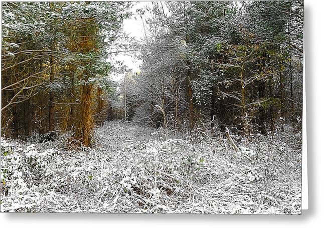 Winter Photos Mixed Media Greeting Cards - Winter Time Greeting Card by Svetlana Sewell