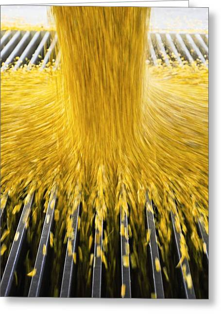 Grate Greeting Cards - Corn Ethanol Processing Plant Greeting Card by David Nunuk