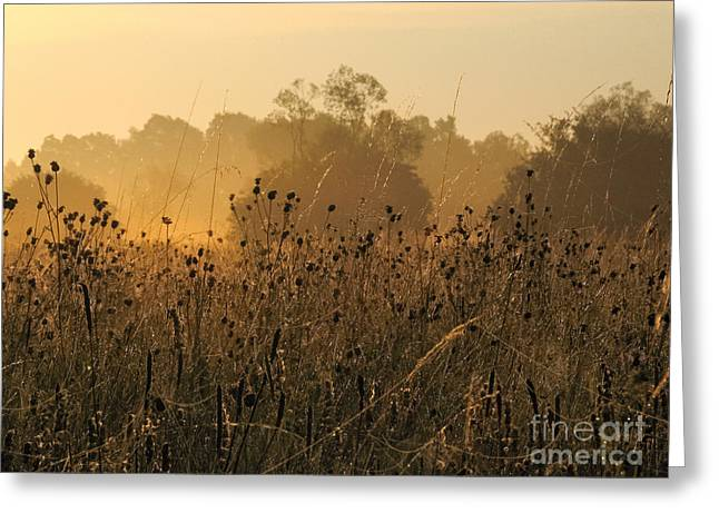 Sweating Photographs Greeting Cards - Sunset Greeting Card by Odon Czintos