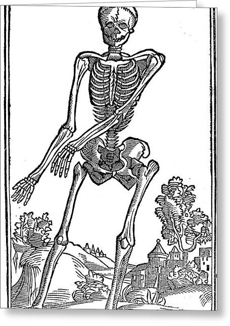 1500s Greeting Cards - Historical Anatomical Illustration Greeting Card by Science Source