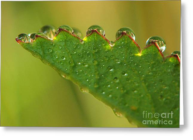 Sweating Photographs Greeting Cards - Drops Greeting Card by Odon Czintos