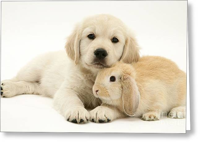 Mixed Species Greeting Cards - Kitten And Pup Greeting Card by Jane Burton
