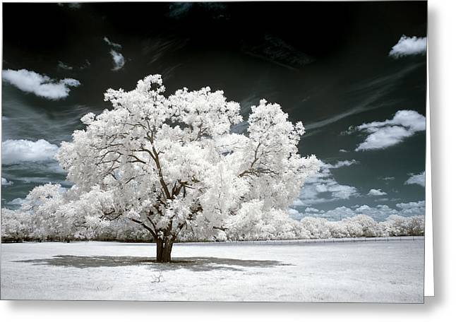 Infrared Greeting Cards - 39 Greeting Card by Mike Irwin