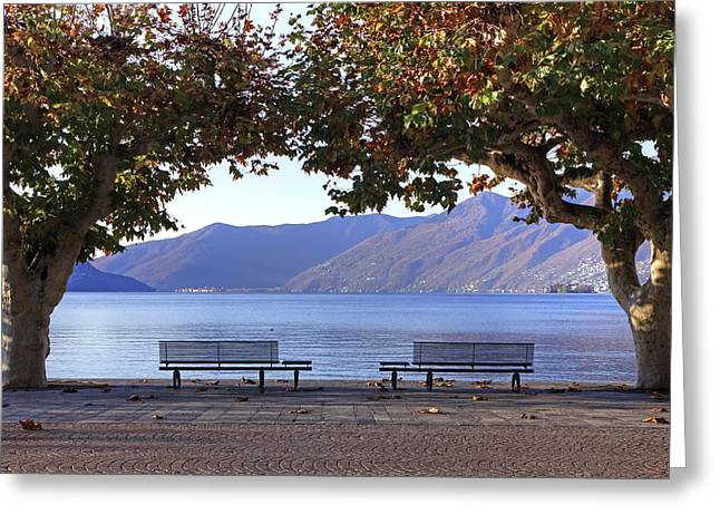 Plane Trees Greeting Cards - Ascona - Lake Maggiore Greeting Card by Joana Kruse
