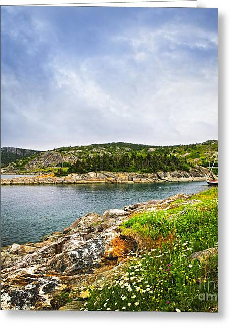 Landscape. Scenic Greeting Cards - Atlantic coast in Newfoundland Greeting Card by Elena Elisseeva