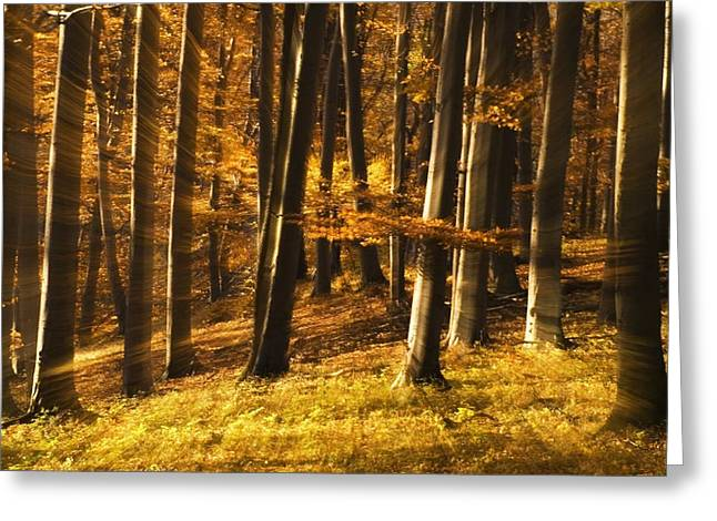Hayrick Greeting Cards - Autumn in forest Greeting Card by Odon Czintos