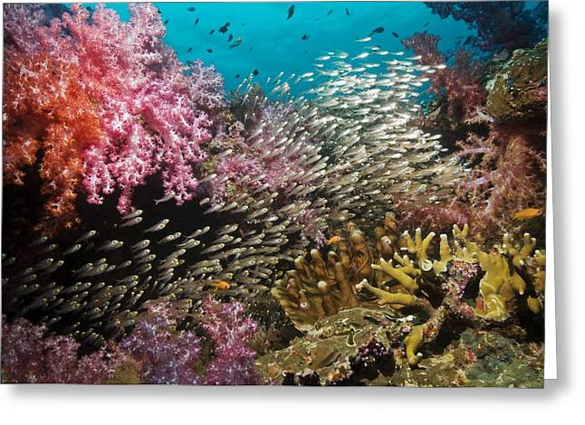 Reef Fish Greeting Cards - Coral Reef, Thailand Greeting Card by Georgette Douwma