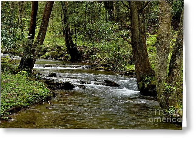 Craig Run Monongahela National Forest Greeting Card by Thomas R Fletcher
