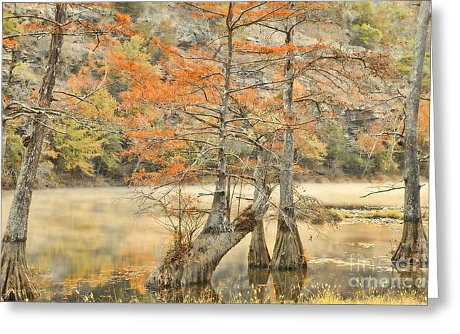 Fort River Greeting Cards - Cypress Trees in the Mist Greeting Card by Iris Greenwell