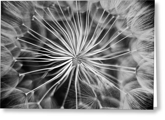 Spring Scenes Greeting Cards - Dandelion Greeting Card by Stylianos Kleanthous
