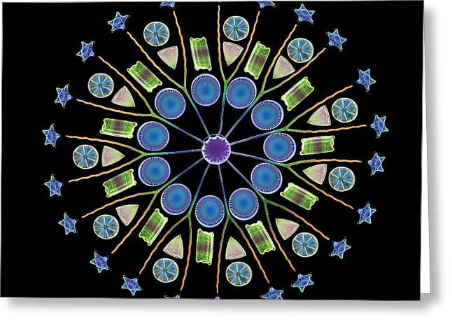 Diatom Assortment, Sems Greeting Card by Steve Gschmeissner