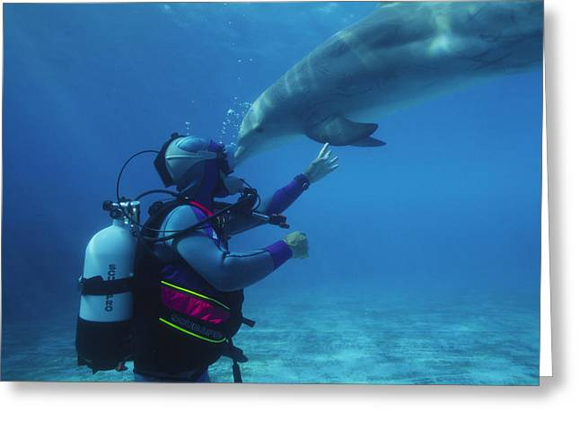 Scuba Divers Greeting Cards - Diver Communication System Greeting Card by Alexis Rosenfeld